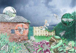 Erf en tuin website 300x212 - Nachtvlinders in Zeeland