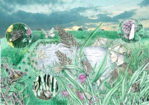 Moerassen website 300x212 - Nachtvlinders in Zeeland