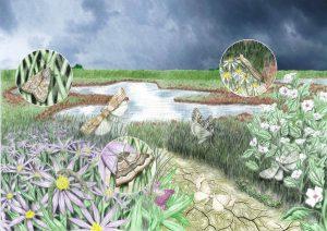 zilte graslanden website 300x212 - Nachtvlinders in Zeeland
