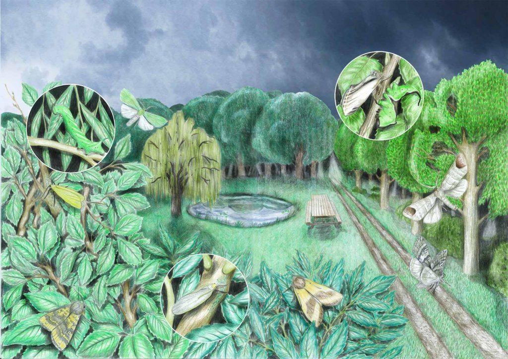 Bossen website 1024x724 - Nachtvlinders in Zeeland