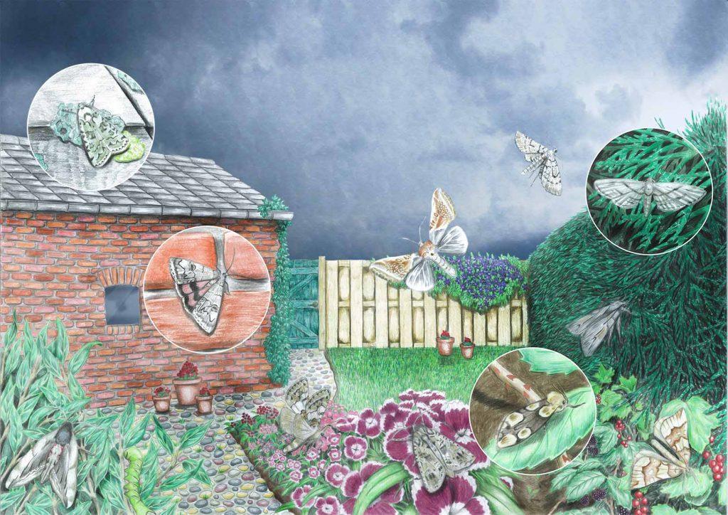 Erf en tuin website 1024x724 - Nachtvlinders in Zeeland