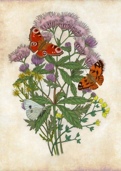 Vlinderplanten wild 400x566 - Natuurplaten